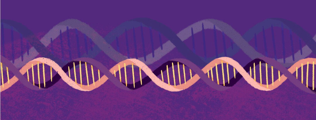 Two strands of DNA run side by side.